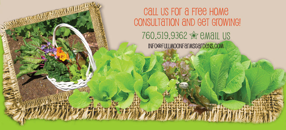 contact us today  for urban vegetable farming 760.519.9362